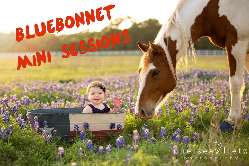 baby photos in Bluebonnets in San Antonio | Chelsea Lietz Photography