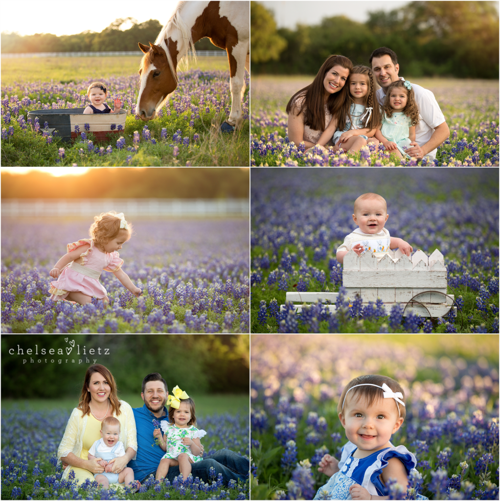 bluebonnet photos in San Antonio